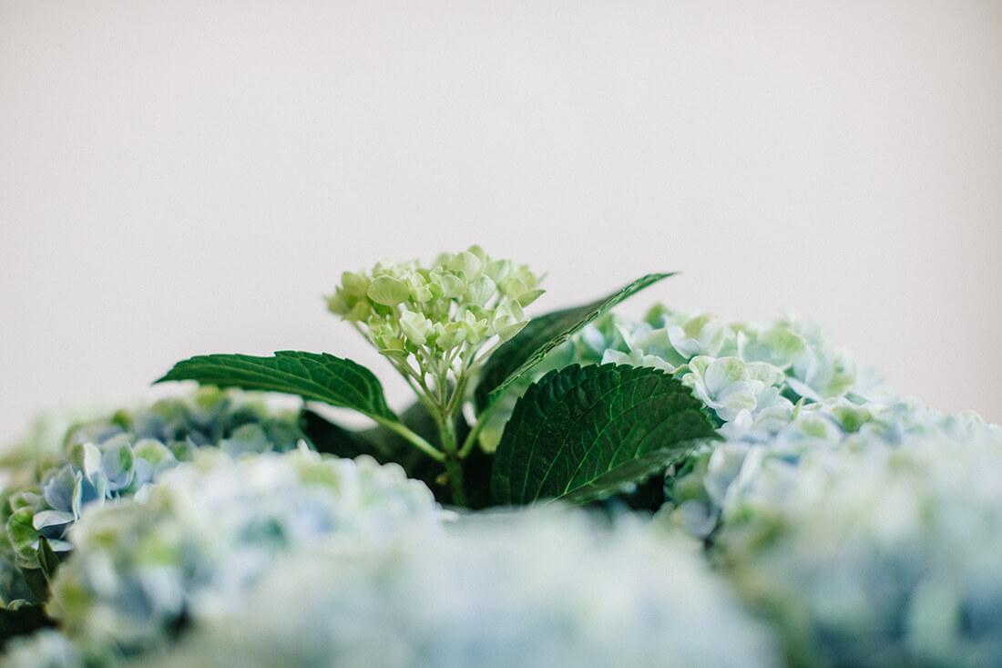 Hausarzt Partenkirchen - Dr. Kainz - Wohlfühlen dank Blumen in der Praxis